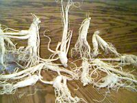 Drying Root
